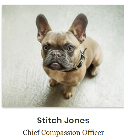 Stich Jones, the French Bulldog, is the honarary Chief Compassion Officer for Brighton Jones